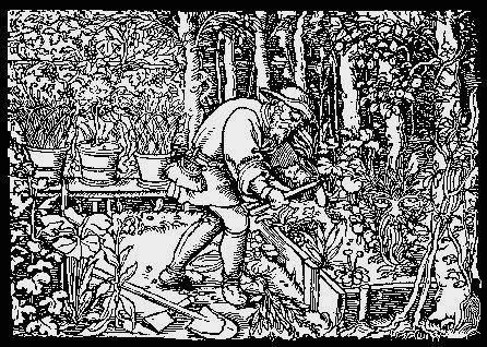 figsforlife.ca - old German engraving
